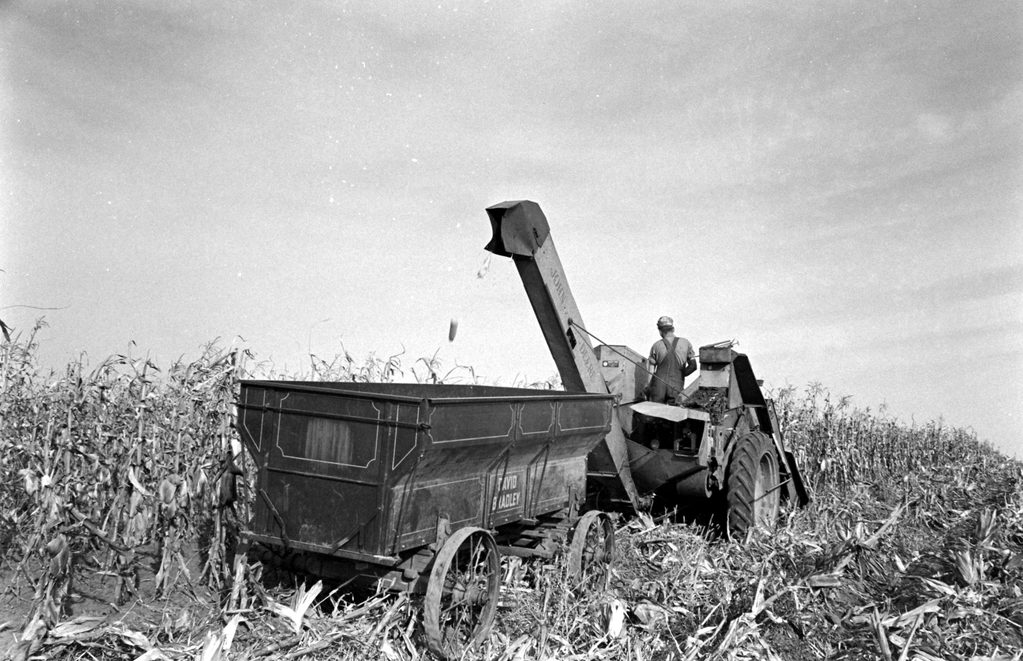 Nebraska Corn Harvest