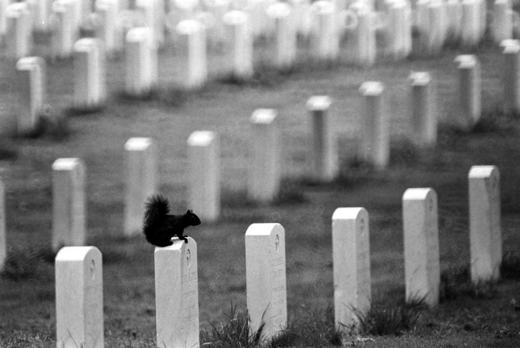 A resident squirrel perches on a headstone at Arlington National Cemetery, 1965.
