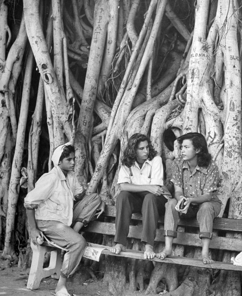 Waikiki tomboys, under a banyon on beach are (from left) Marion Woolsley, 14, Chinese-Hawaiian-English; Patricia Cameron, 16, Portuguese-Scotch-Irish; Beatrice Clarke, 16, Hawaiian-Chinese-German. Canoes are stored under roots.