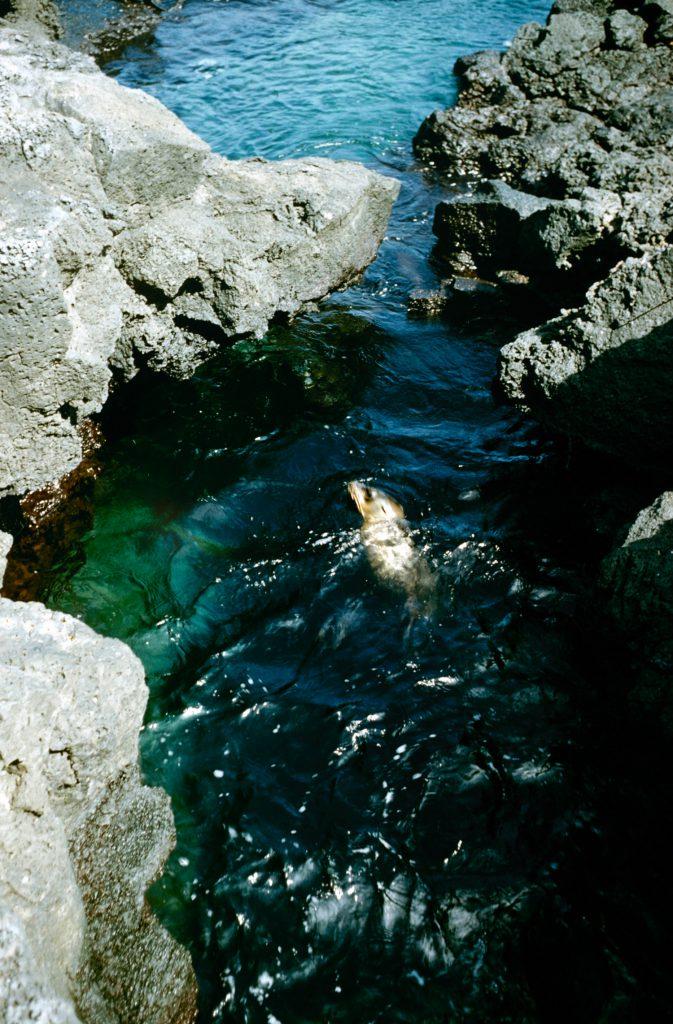 Galapagos Islands 1957