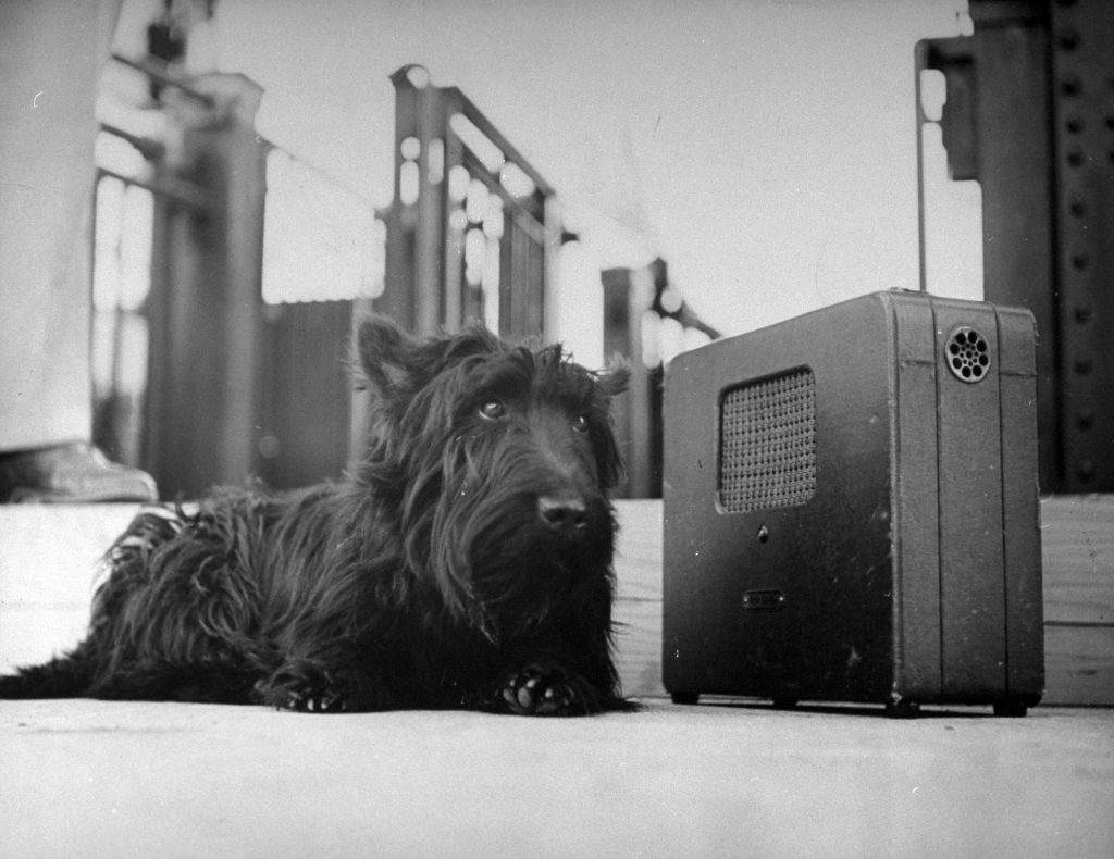 Fala listening to FDR's Acceptance Speech, 1944.