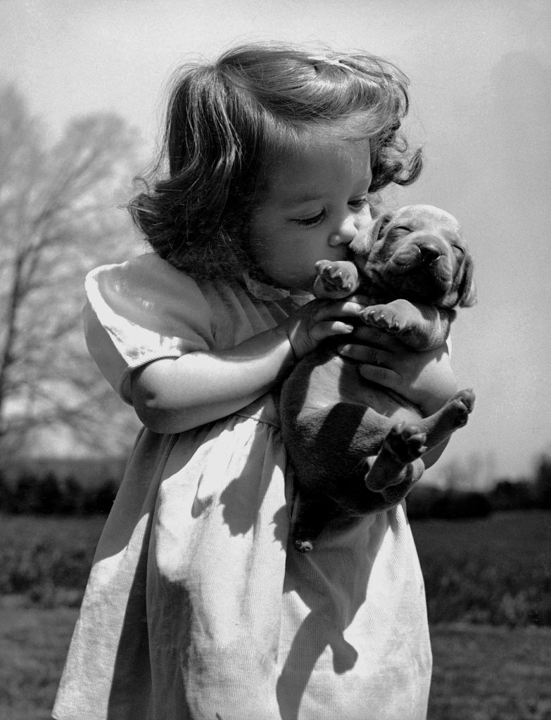 Christina Goldsmith tenderly kissing a Weimaraner puppy, which she took from a new litter of her father's stock since he is a top breeder of Weimaraner hunting dogs. 1950.