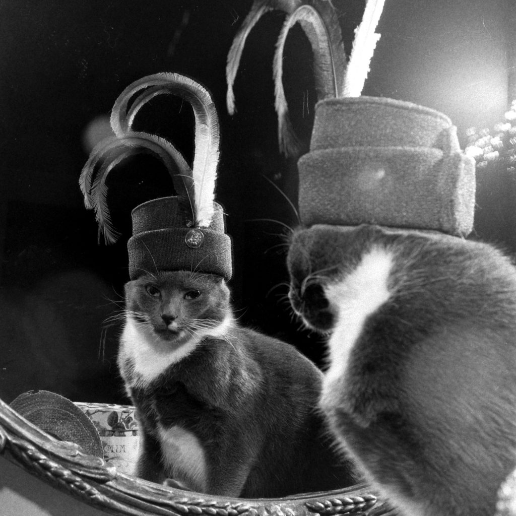 A cat named Monkey with a large hat collection, circa 1948/1949.