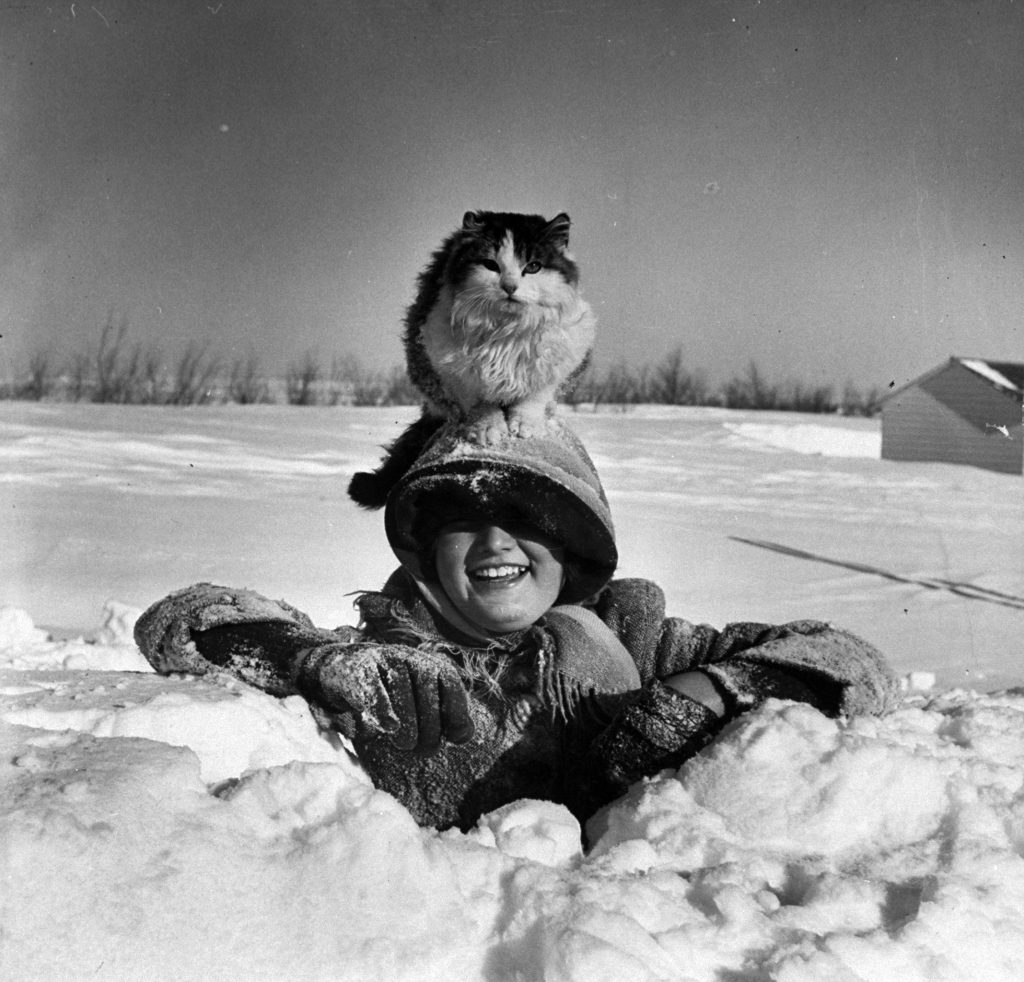 Sharon Adams, 10, playing in a snow drift as her cat maintains its comfortable perch atop her head, 1952.