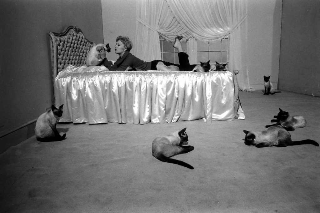 """Kim Novak playing with some Siamese cats that were used in one of her movies, """"Bell, Book and Candle,"""" 1958."""