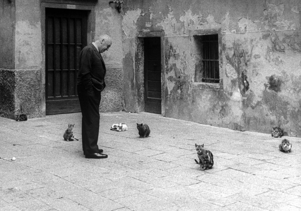 """Otto Preminger looking at stray cats on Venice street while attending Venice Film Festival at which his film """"Anatomy of a Murder"""" was shown, 1959."""