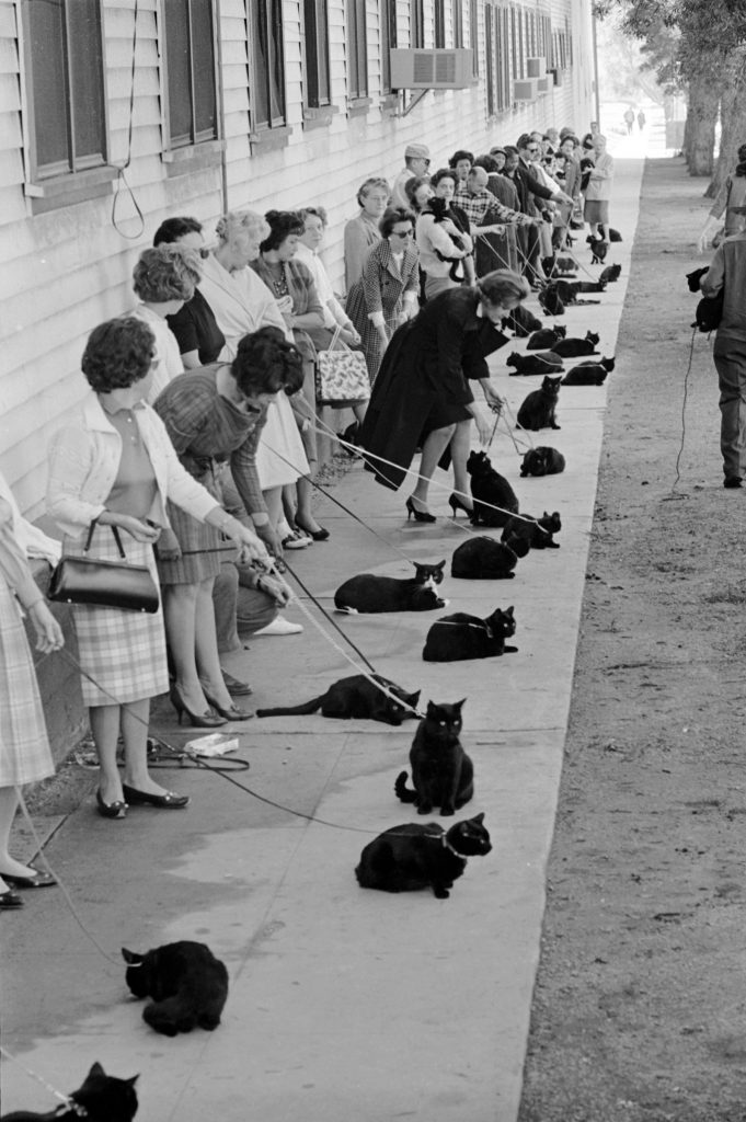 """Black cats and their owners in line for audition and casting for movie """"Tales of Terror,"""" 1961."""