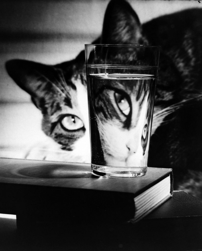 Manipulation of light to create emotive and visual effects with a cat, 1963.