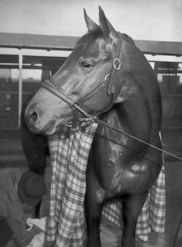 Championship horse Seabiscuit standing in stall after winning Santa Anita Handicap, 1940.