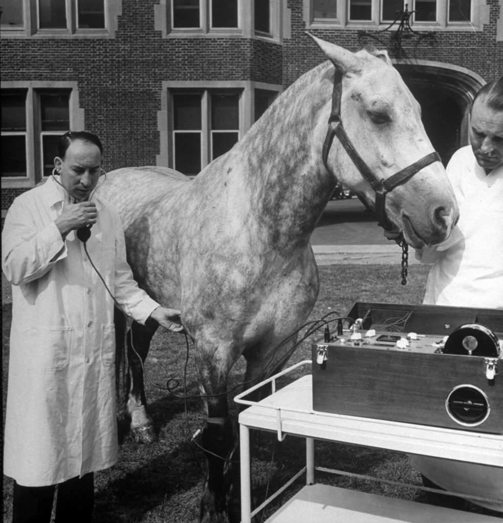 Doctor listening to horse's heart beats with stethoscope and recording them on Stetho-Cardiette at University of Pennsylvania's School of Veterinary Medicine, 1940.