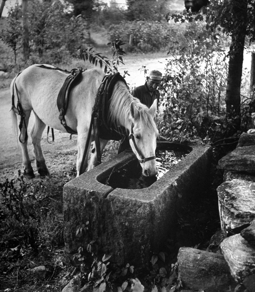 Man watching his work horse drink from a water trough, 1944.